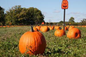 pumpkin-1693018_640